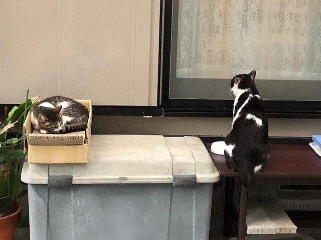 タンちゃん&パンダちゃん