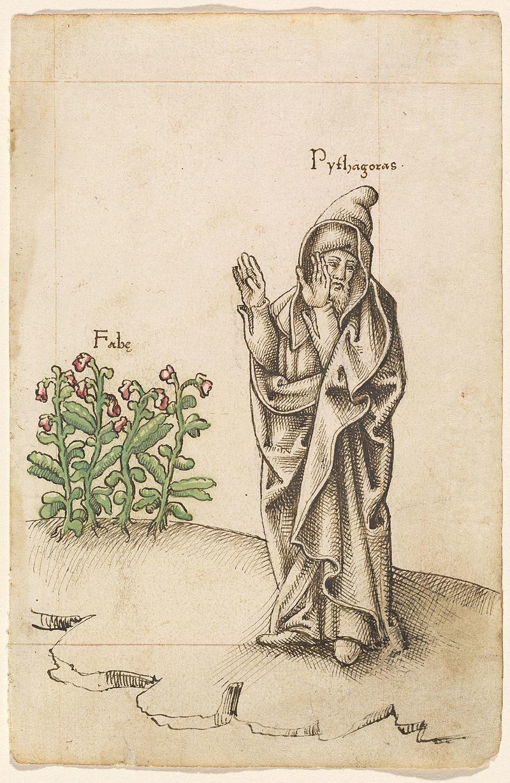 豆から顔をそむけるピタゴラス