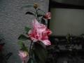 DSCN5114.jpg