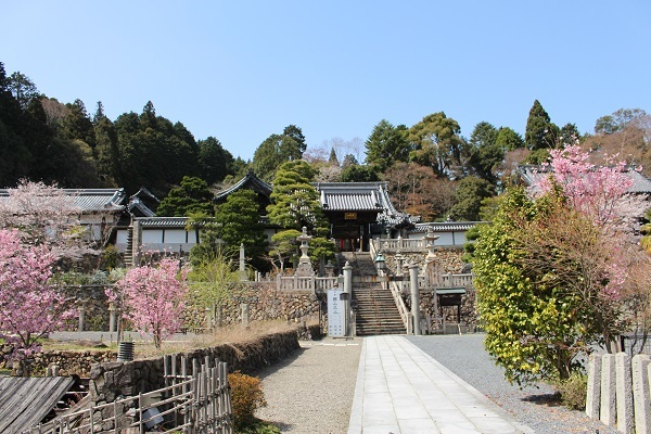 2018.04.09 柳谷観音(桜)-1