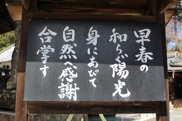 2018.04.09 柳谷観音(桜)-3