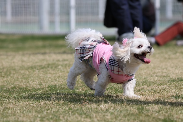 2018.04.11 関西マルチーズクラブオフ会inビワドッグ②-9
