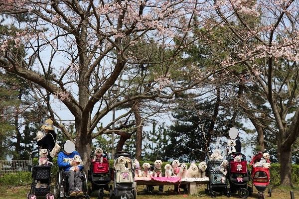 2018.04.14 関西マルチーズクラブオフ会inビワドッグ④-2