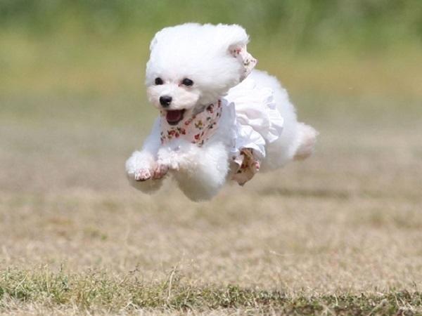 2018.05.05 淡路島旅行1日目③ 南あわじドッグラン飛行犬撮影所③-1