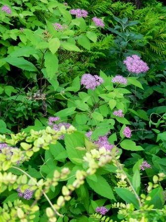 my-garden 183