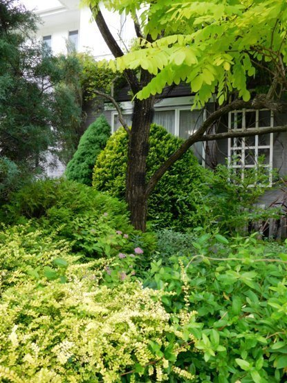 my-garden 185