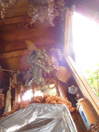 my-garden 035 (2)