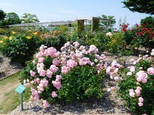 my-garden 009 (2)
