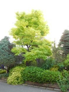 my-garden 001 (2)
