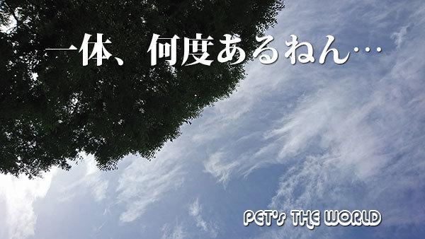 2018-07-25-02.jpg