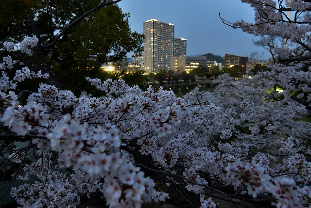 広島城16