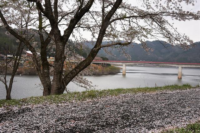 八千代湖4