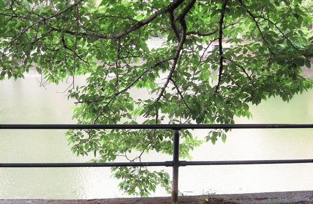 梅雨入り7