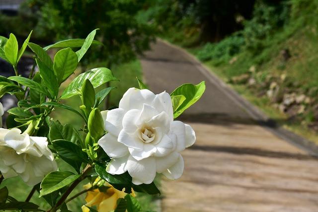 水分の花1