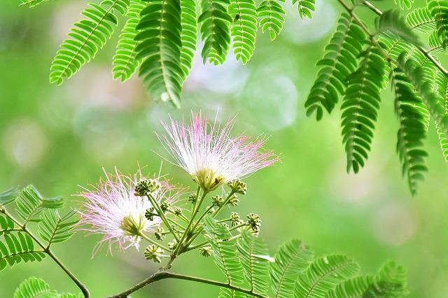 水分の花4