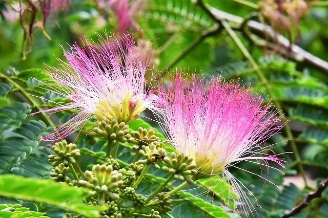 水分の花6