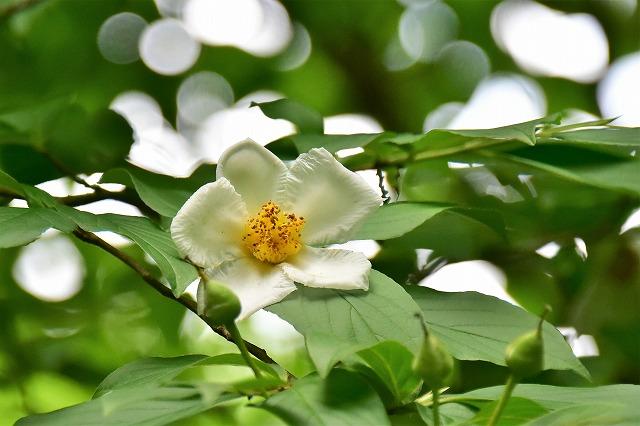 水分の花7