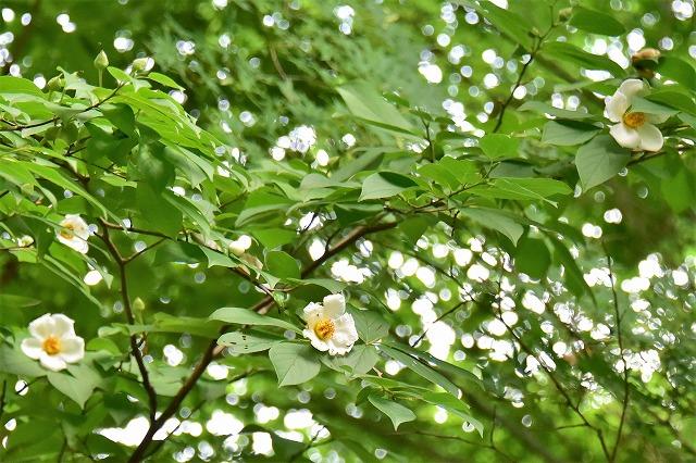 水分の花8