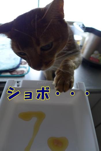 ソウデスネ