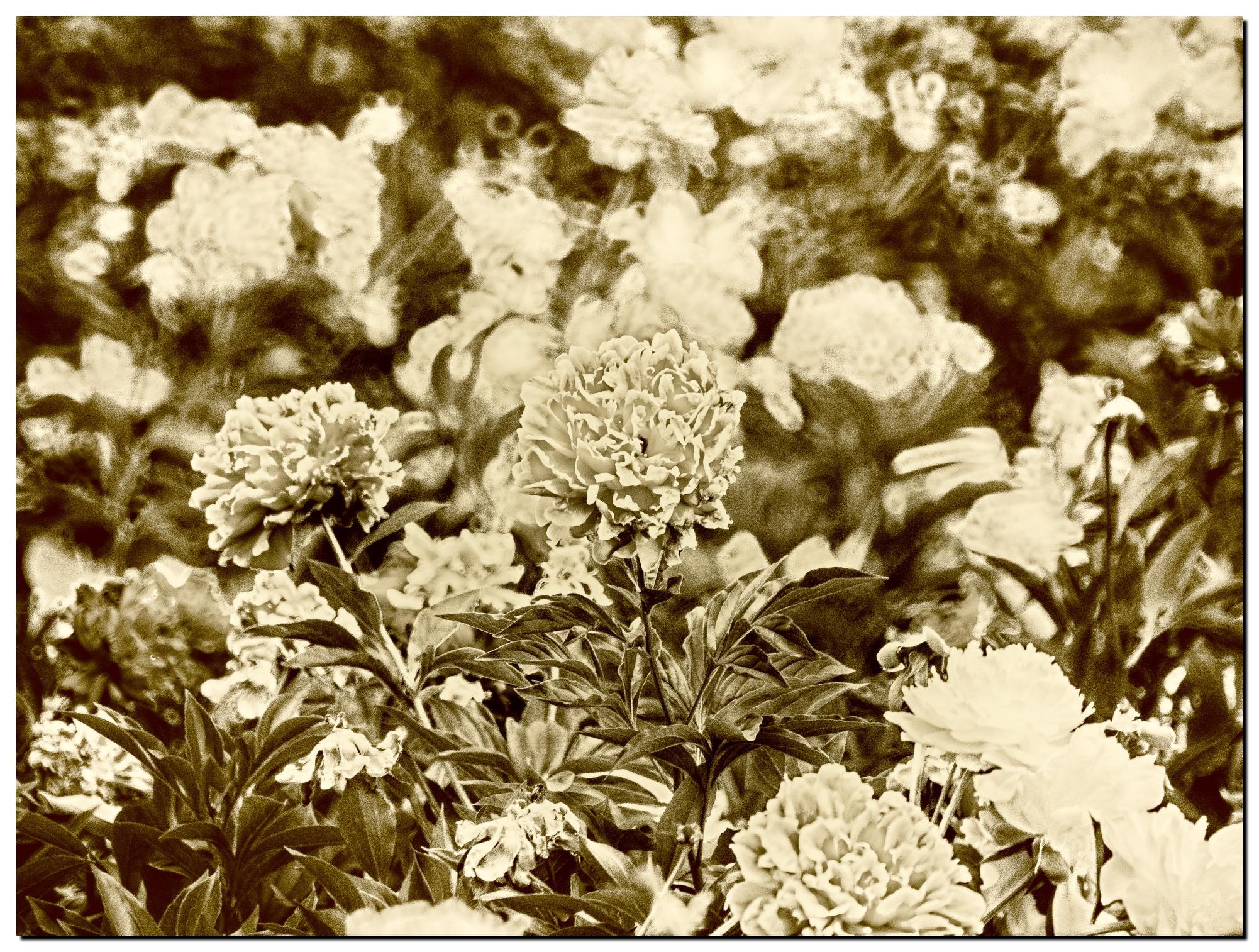03LR6-P5200591-Edit-2.jpg