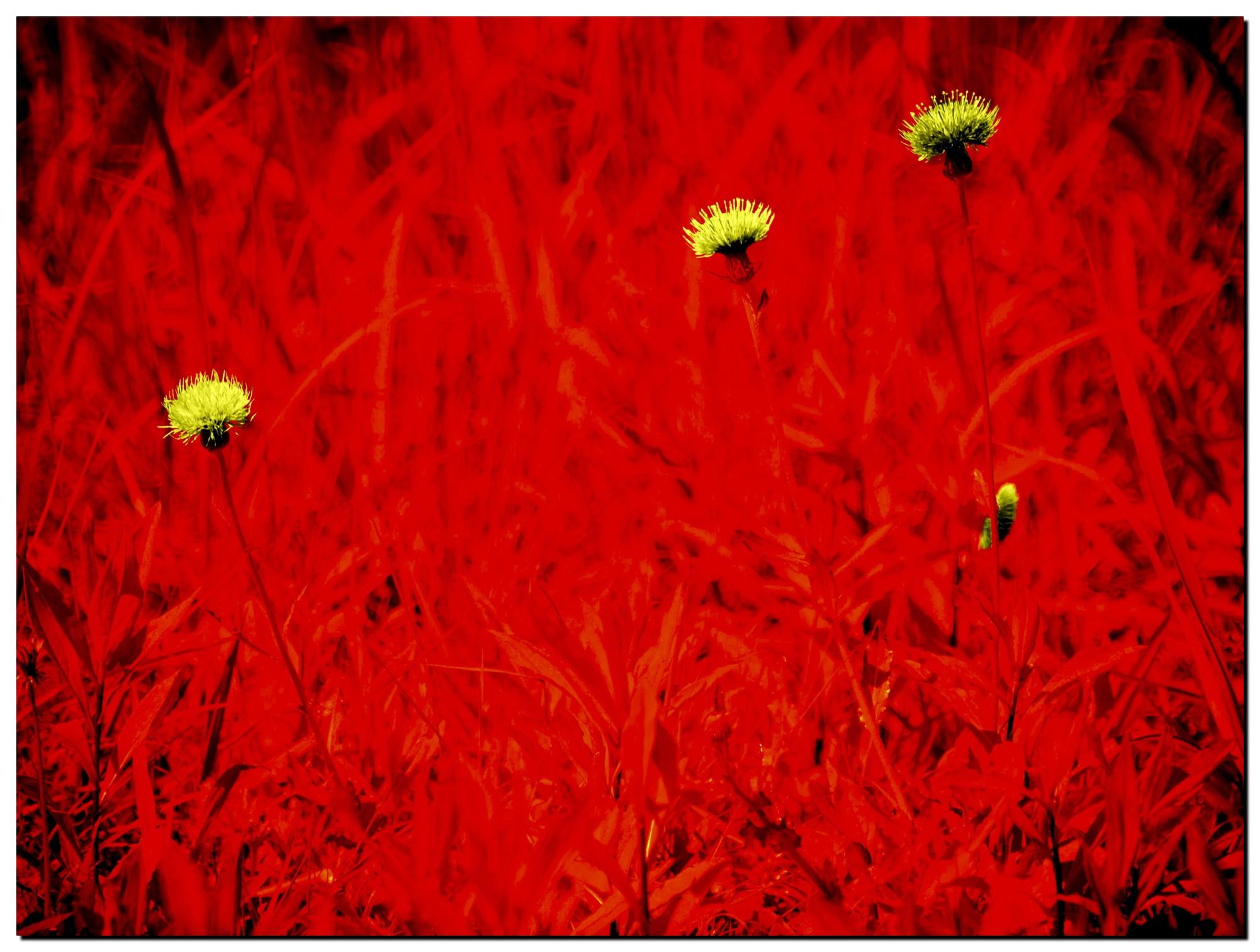 04LR6-ED200194-Edit-2-2.jpg
