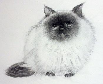 鉛筆画 猫