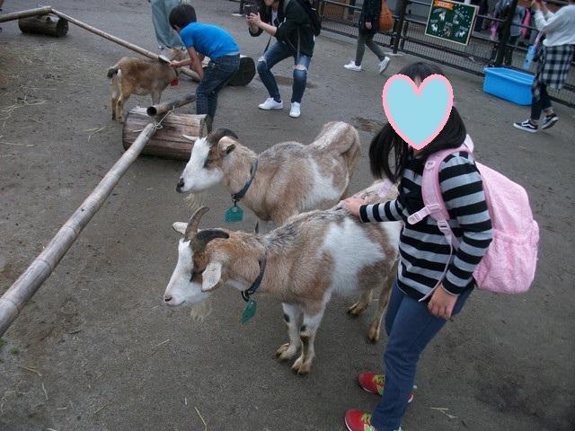 2018年10月八木山動物公園3