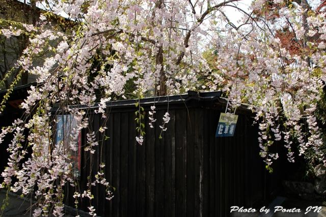 akita1804-006.jpg