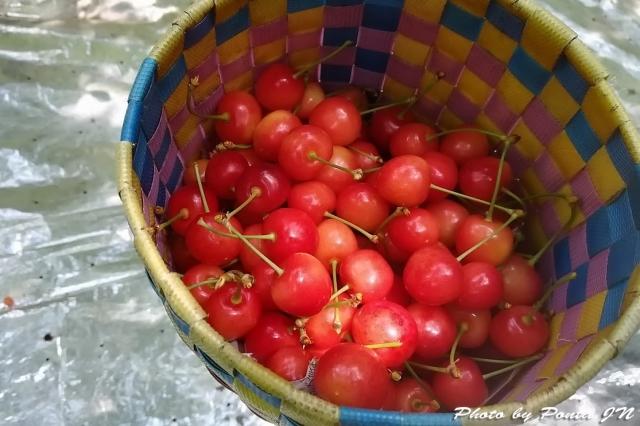 cherry18-025.jpg