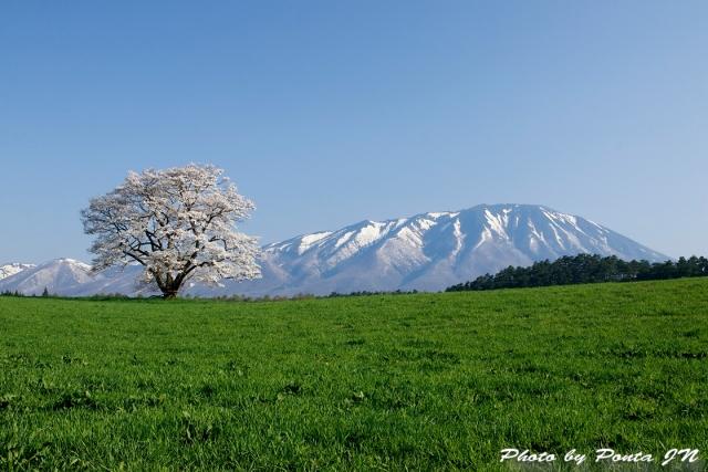 iwate1804-008.jpg