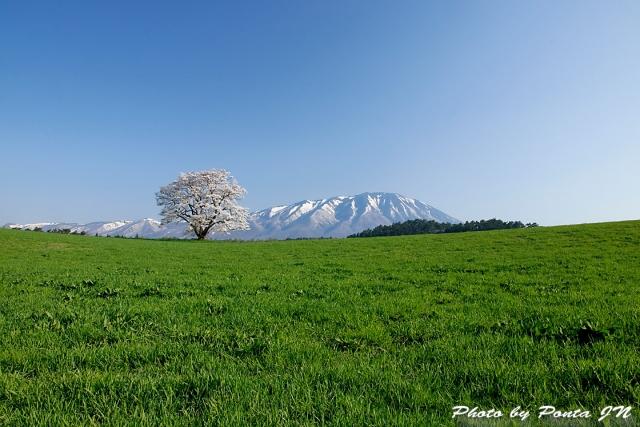 iwate1804-012.jpg