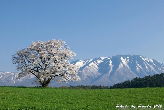 iwate1804-031.jpg