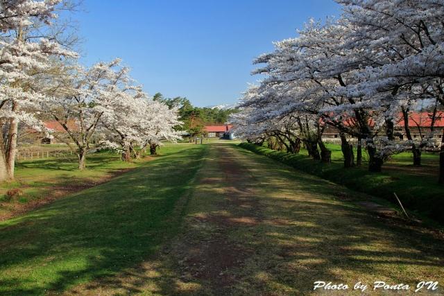 iwate1804-048.jpg