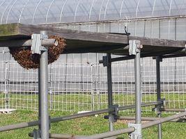 【写真】アランフィールド内ののぼり台の下に分蜂したミツバチの様子