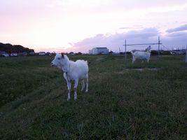 【写真】夕焼け空の下で家に帰るのを待つアランとポール