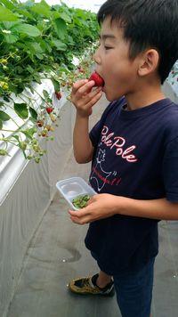 【写真】紺色のポレポレTシャツを着た瑛大くんがいちごを食べている様子