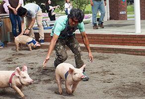 【写真】スタート直後、こぶたのお尻を叩いて走る農園主