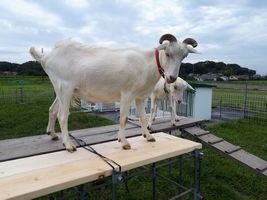 【写真】上り台の一本橋の板をチェックしているアランとポール