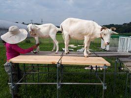 【写真】上り台の上でブラッシング中のアランとポール