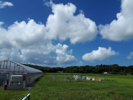 【写真】台風一過の青空の下のアランフィールドの様子