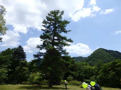 休憩芝生のシンボルツリー