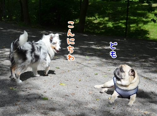 軽井沢DR3