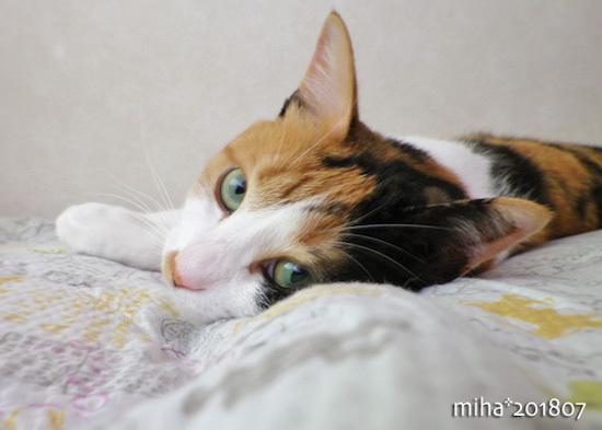 miha18-07-47.jpg