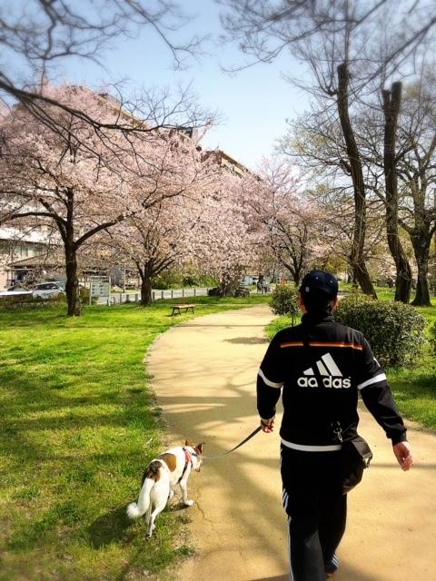 桜きれいだったね🌸