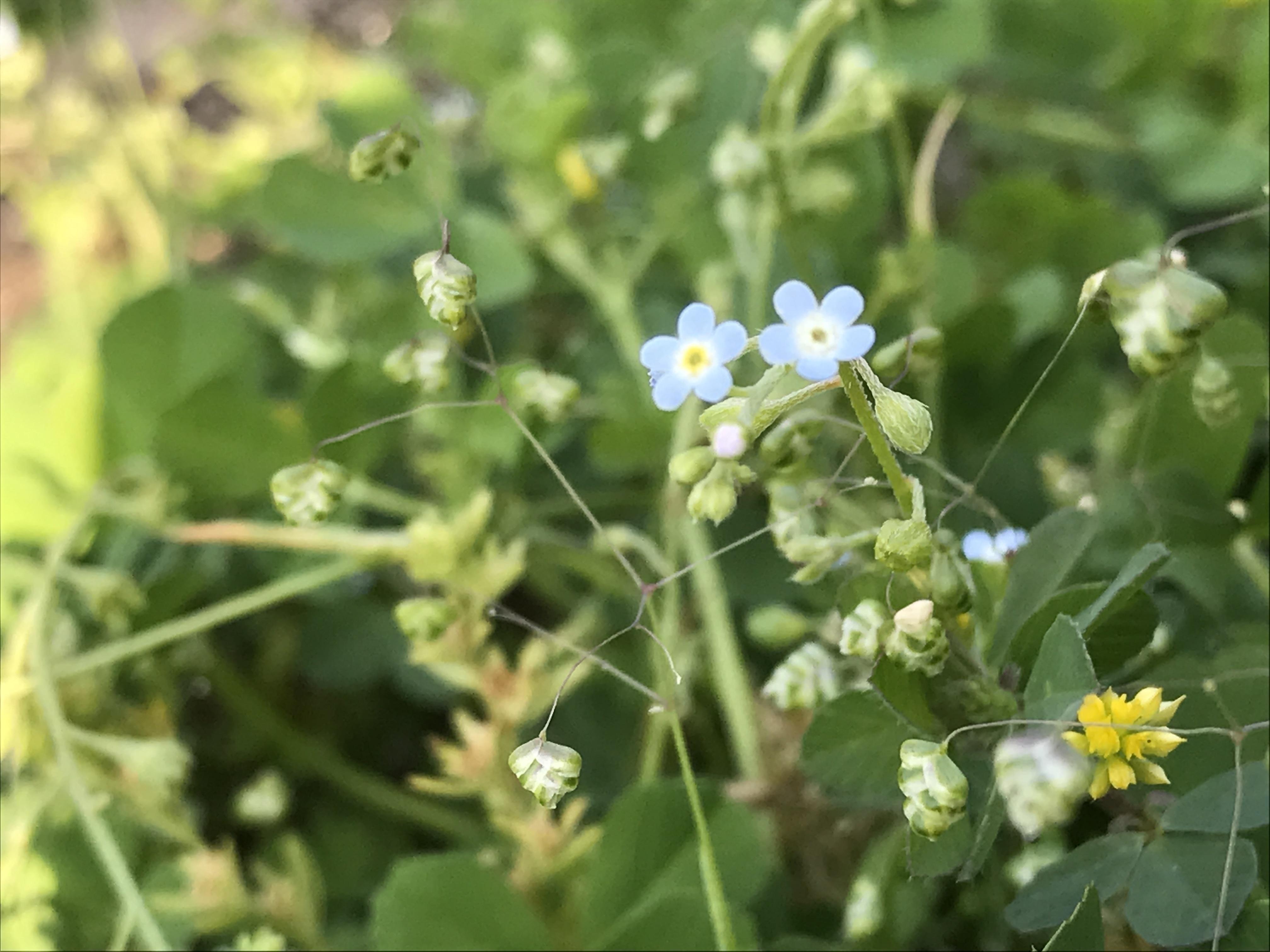 福岡に咲く野花