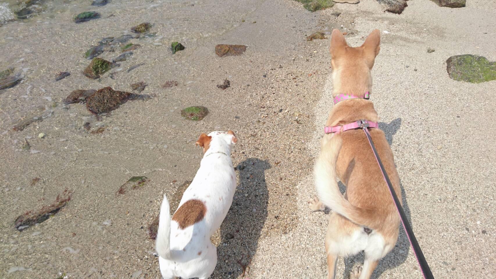マリリンと仲良しの癒し犬Kくん✨❤✨