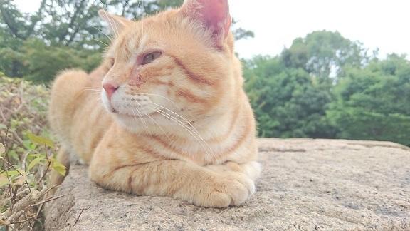 松山総合公園①のボス猫くん(=^ェ^=)