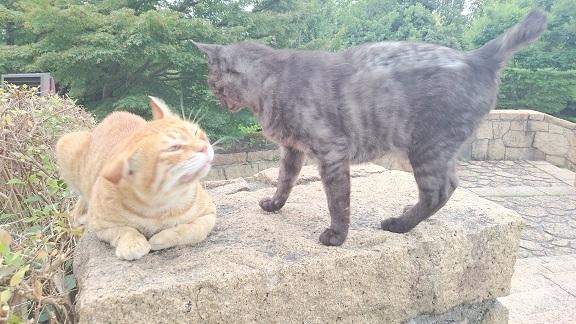 松山総合公園②のボス猫(左)と、松山総合公園では珍しく6歳で長生きの女の子(右)