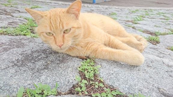 松山総合公園⑤の猫トラちゃん、まったり休憩タイム