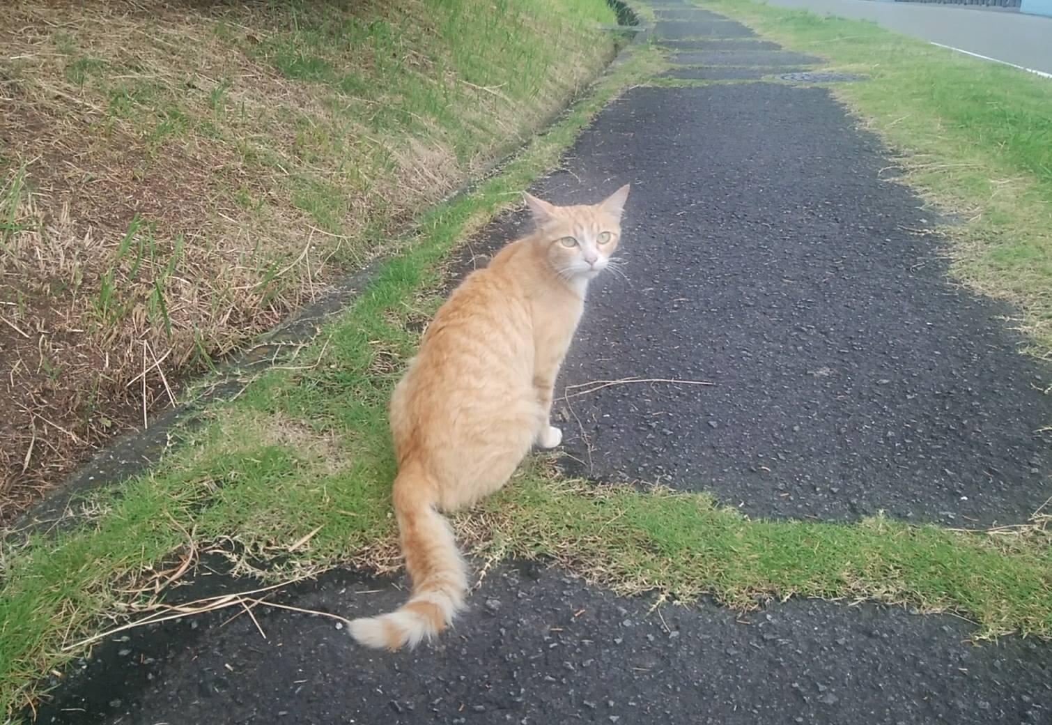 アグネス 豪雨の後の猫ちゃん①